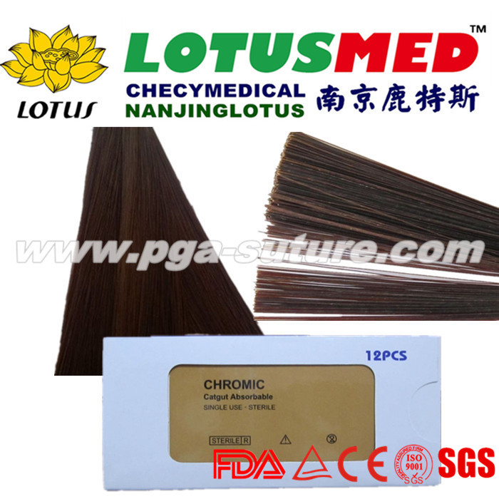 Barbed Chromic catgut sutures